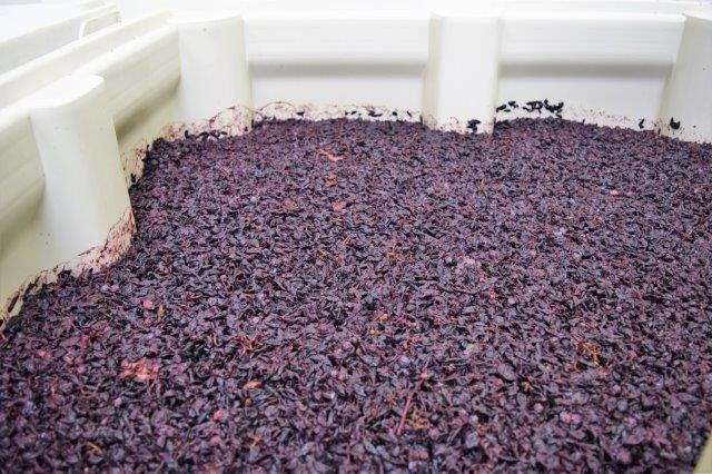 """Grape skins form a """"cap"""" at the top of the fermenting bins at DevenLore Winery."""