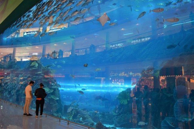 Dubia Mall Aquarium