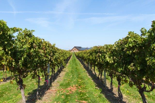 Tour Newport's nearby wineries.