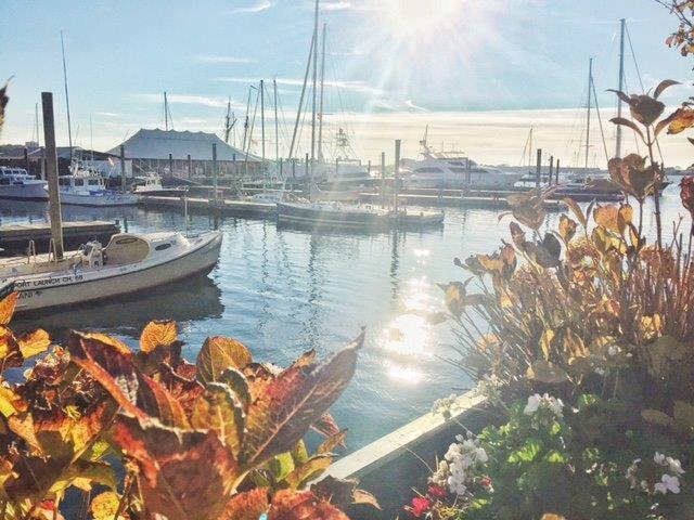 Sailboats at Newport Harbor.