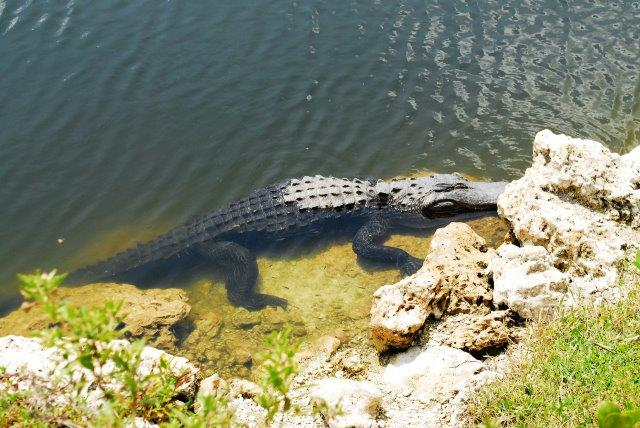 Everglades waysides