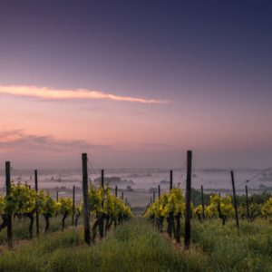 napa valley wineries