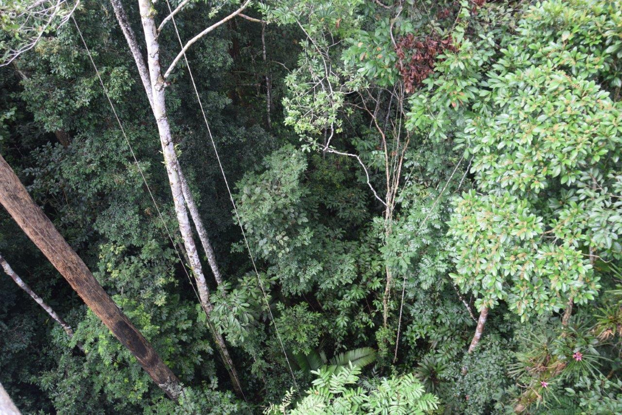Image result for amazon canopy