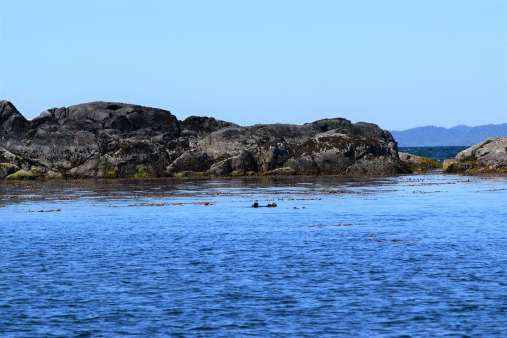 milbanke sound otters