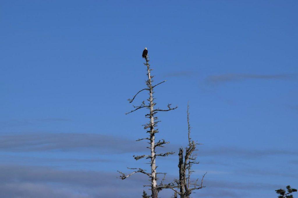eagles milbanke sound