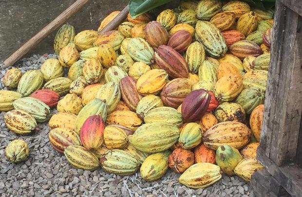 charleston cocoa academic