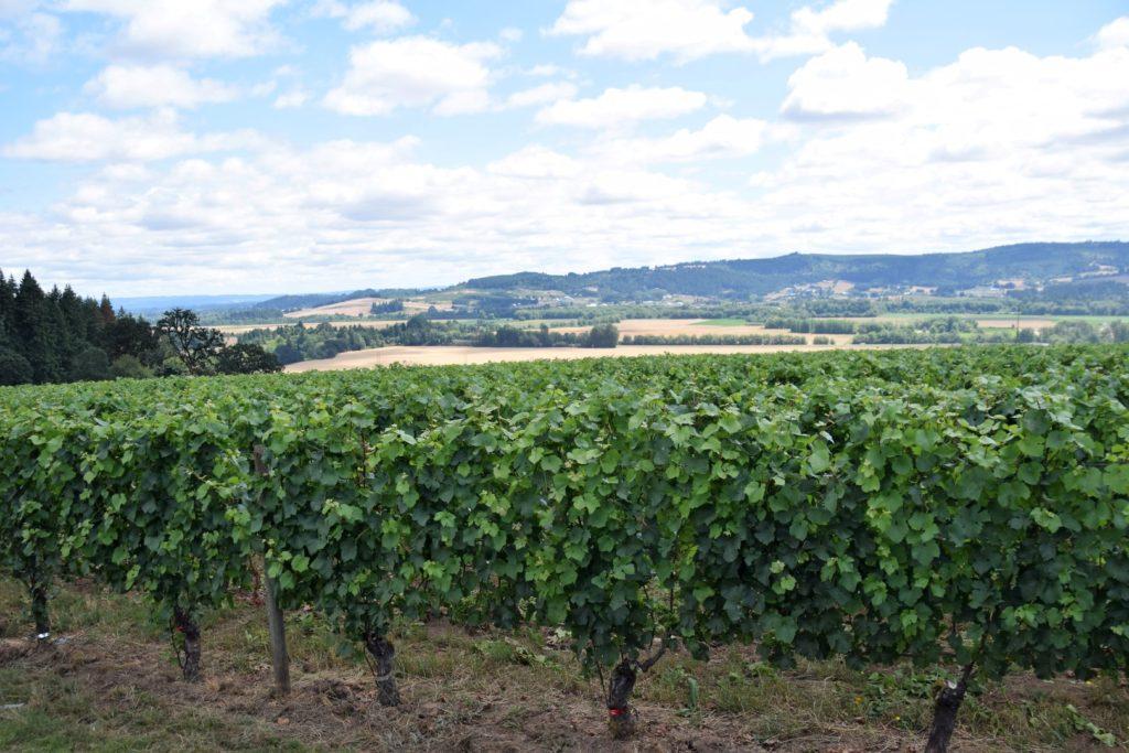 Drink Pink Patton Valley Vineyard