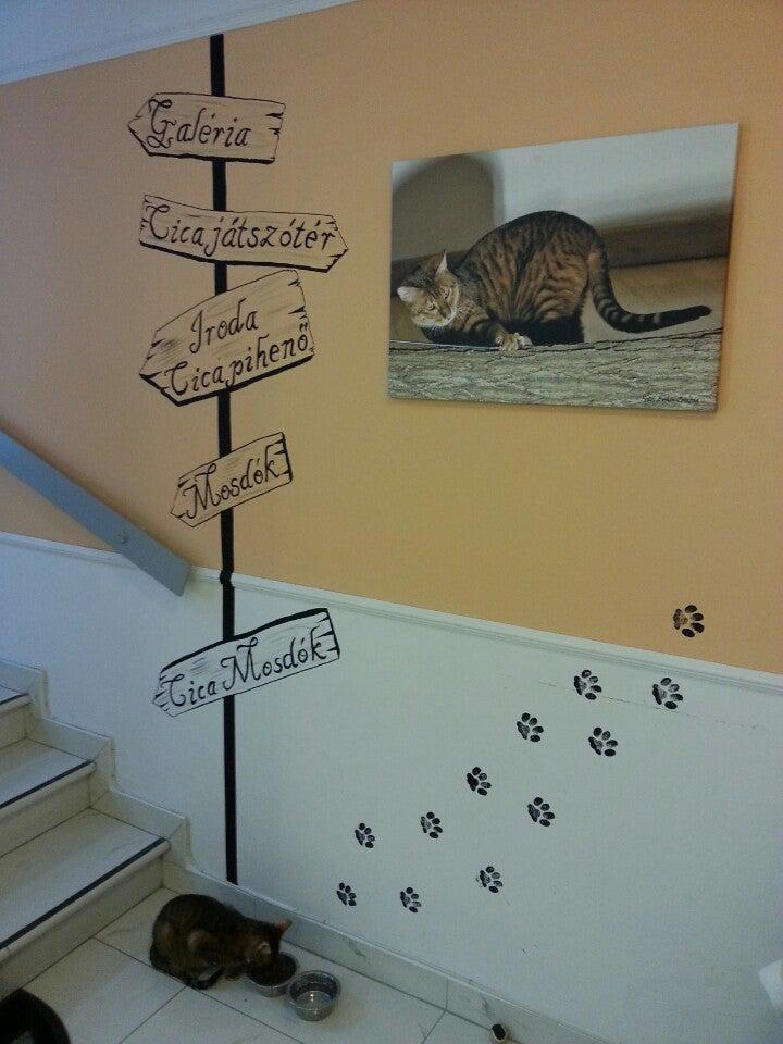cat cafes in Europe