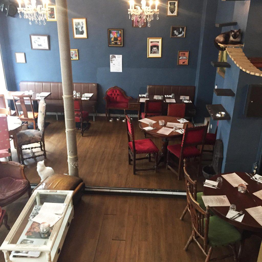 cat cafe in europe Le Café des Chats, in Paris