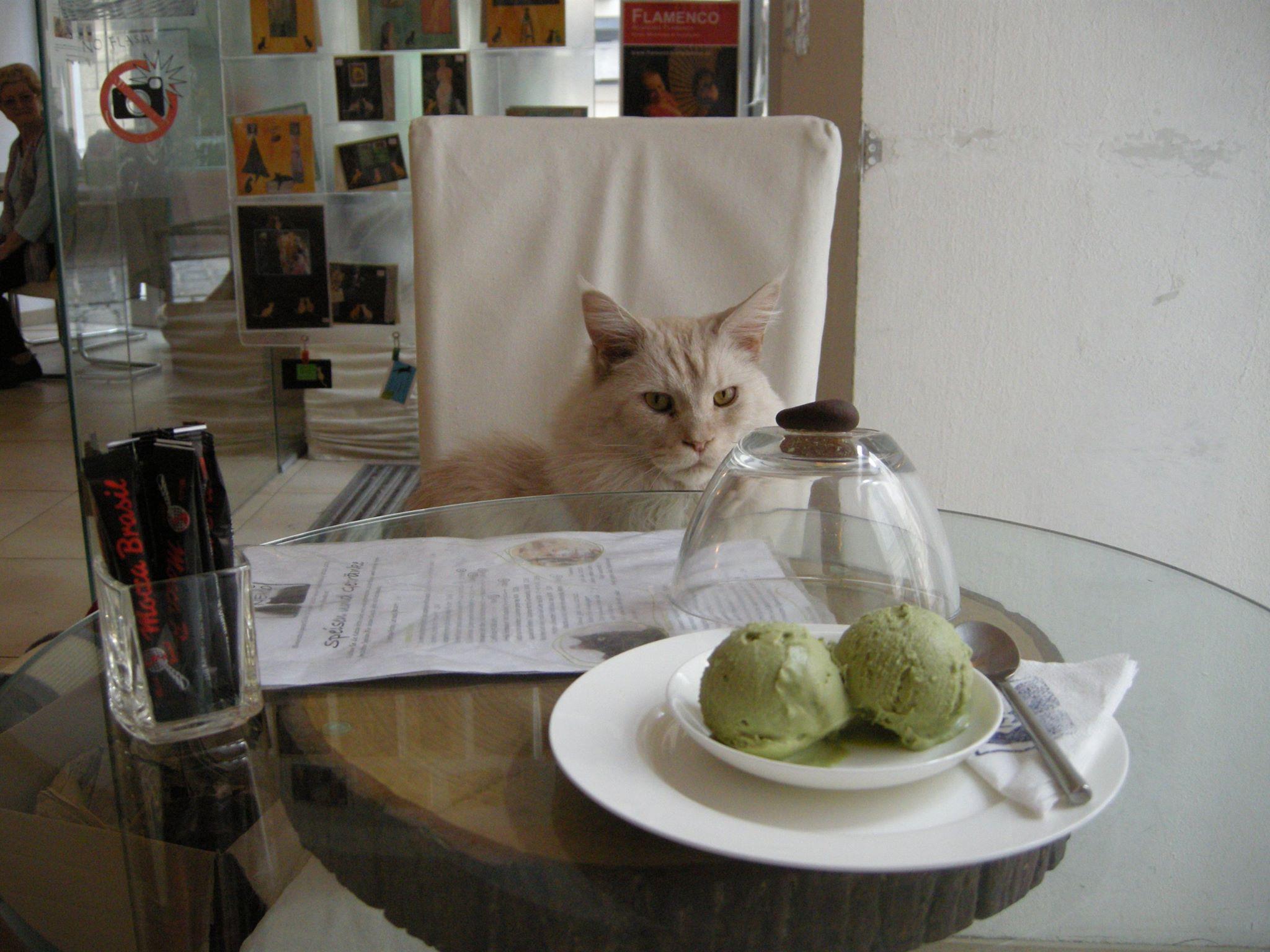 Neko in Vienna, Austria cat cafes in Europe