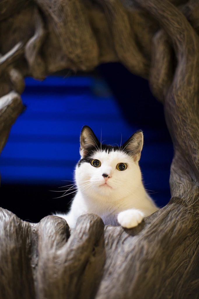 Lady Dinah, cat cafe in London, England