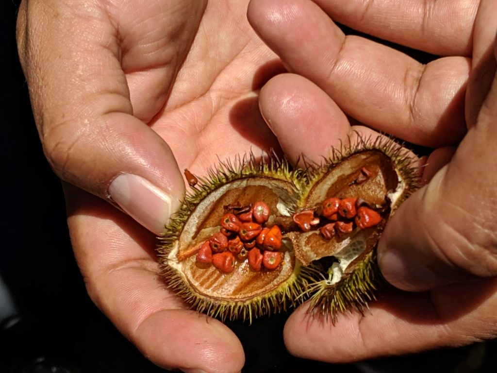 amazon eco lodge annatto seeds