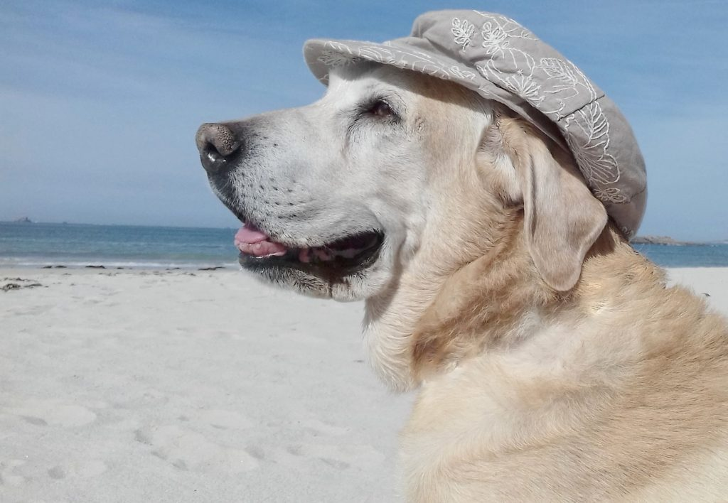 dog-friendly Charleston pet travel
