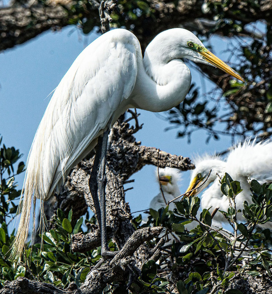 view and photograph Florida birds (Adrianne Brockman)
