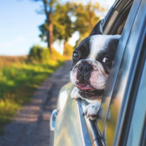 car travel with pets