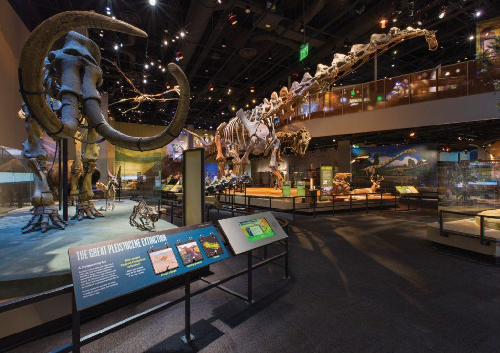 visit dallas museums