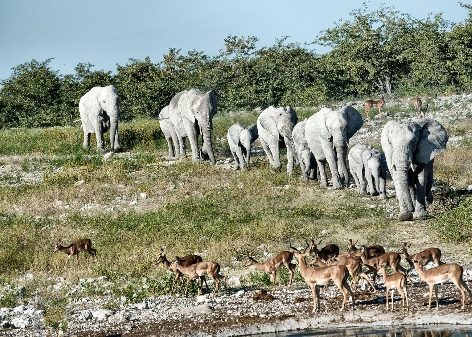 Etosha National Park stunning namibia elephants safari