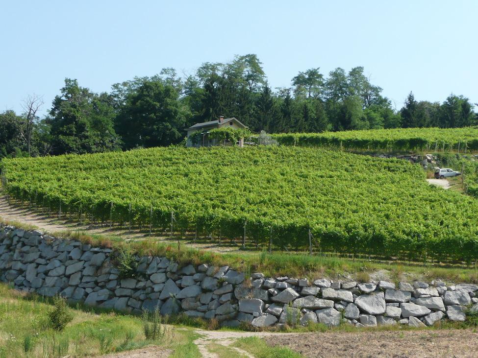 Travaglini vineyard