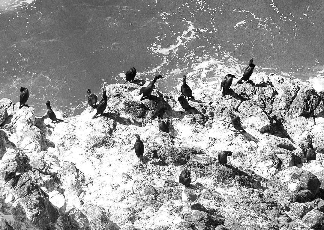 birds at Heveta Head