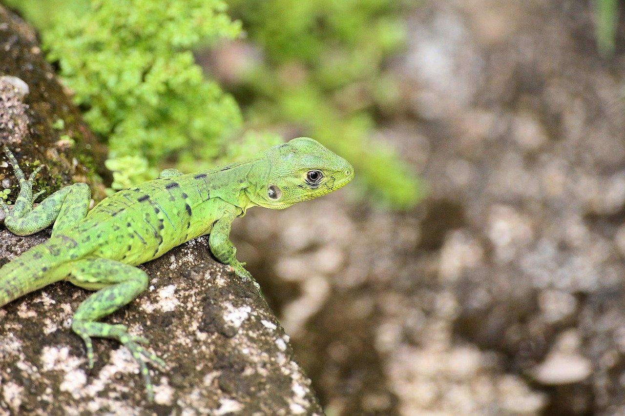 nature animals Belize