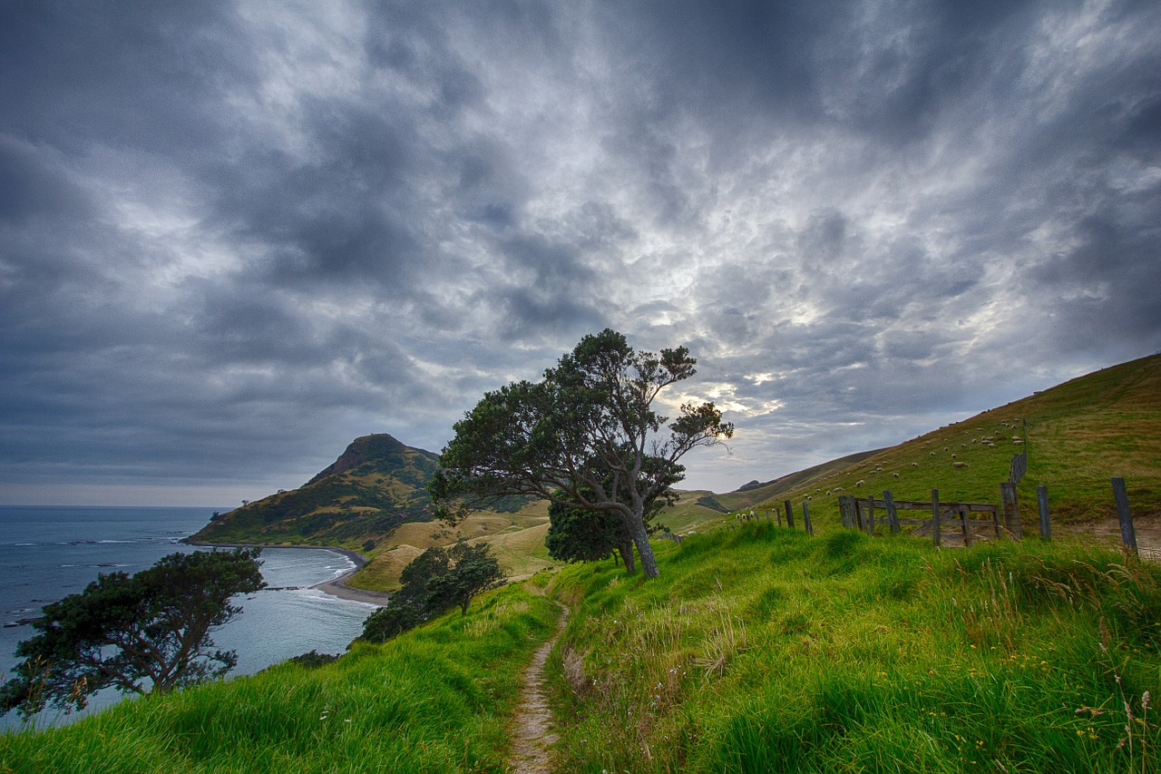 New Zealand path trail
