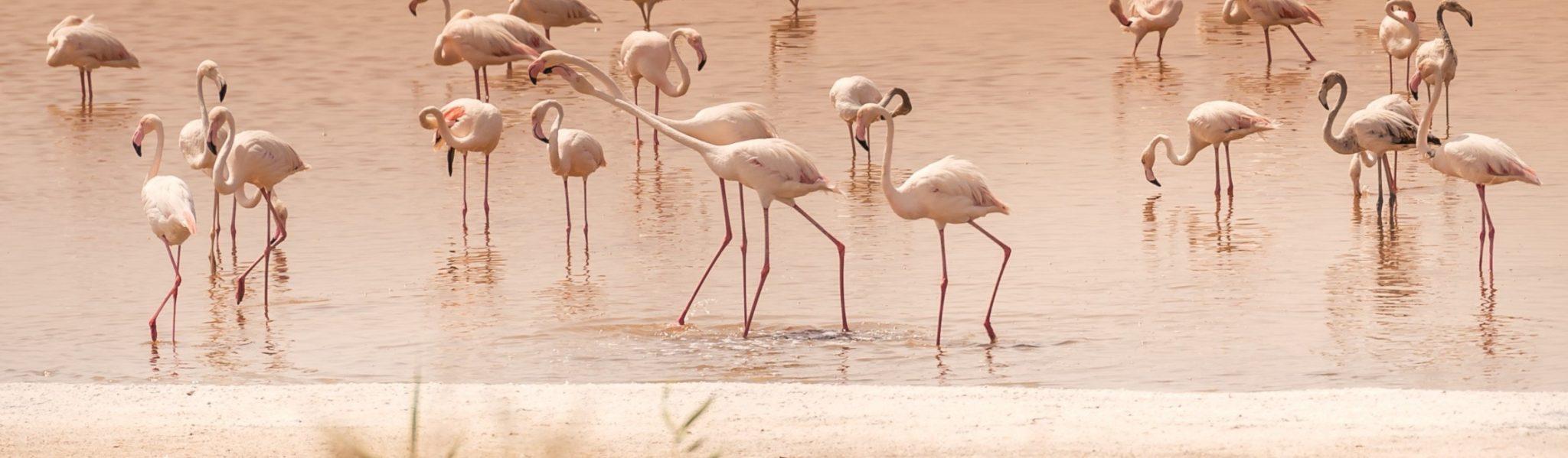al wathba wetland reserves in the uae