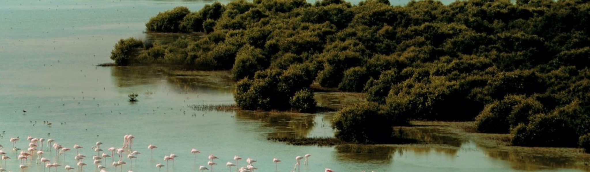 al-zorah nature reserves in the uae