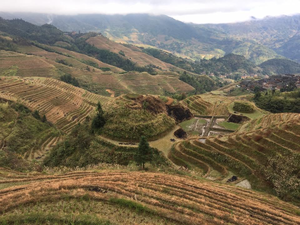 Chinese rice fields Photo by Nicholas k Dahlhoff