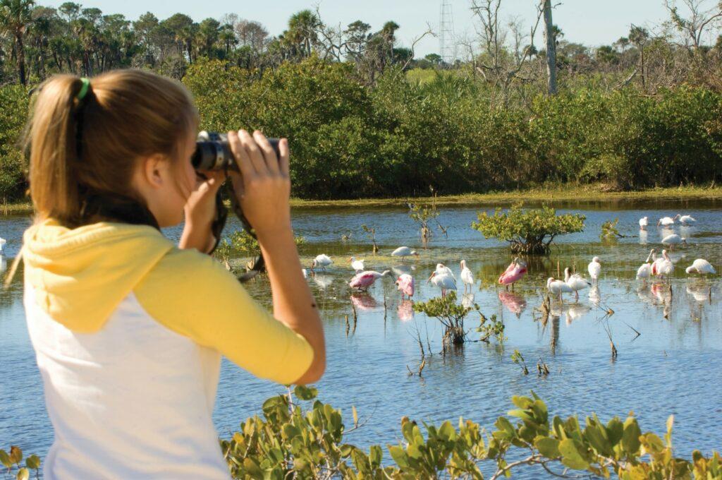 birding Merritt Island Florida's Space COast