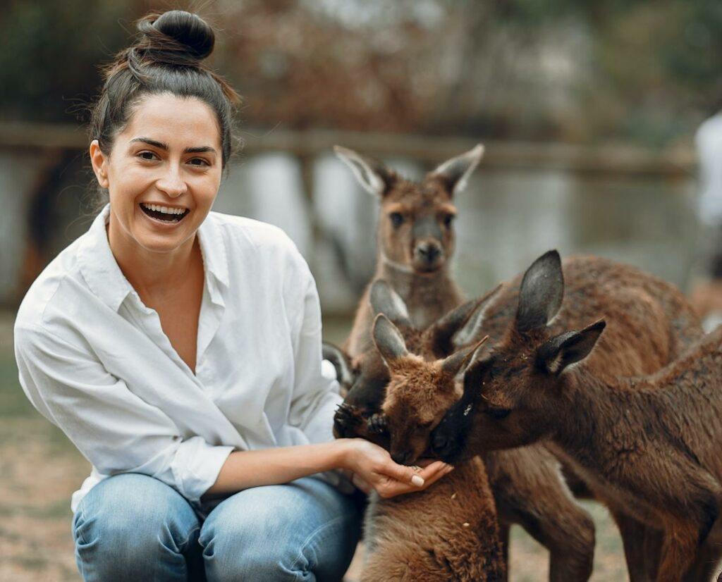 kangaroos roof wildlife in australia